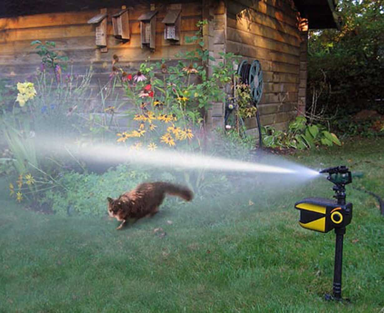 Top 10 Best Motion Activated Sprinklers In 2019 Top