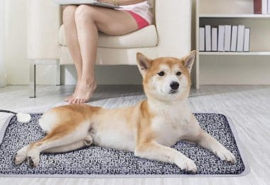 electric heating pad for pets